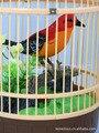 Электронные Маленькая птичка, Игрушки sound control Клетки Для Птиц моделирование птица клетке круглый птичья клетка головоломки детей игрушки подарки для детей