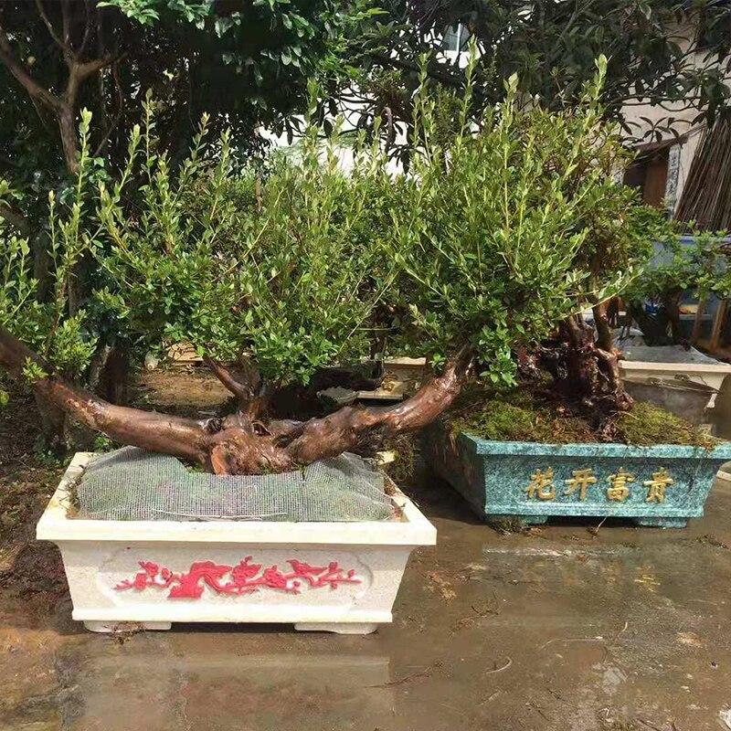 60 cm/23.62in Flessibile Caratteri Cinesi di Plastica Semplice Casa Giardinaggio Bonsai FAI DA TE di Cemento Vaso di Fiori Piazza Fioriera Muffa