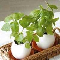 Eco E Garden Flowers Will Bloom Egg Egg DIY Birthday Gift Ideas Office Desktop Mini Plant