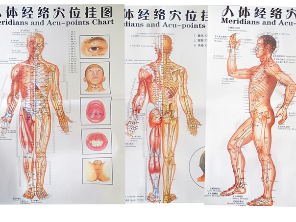 3pcs free shipping color body acupuncture points chart meridian 3pcs free shipping color body acupuncture points chart meridian points chart meridian charts three side front back in books from office school ccuart Image collections