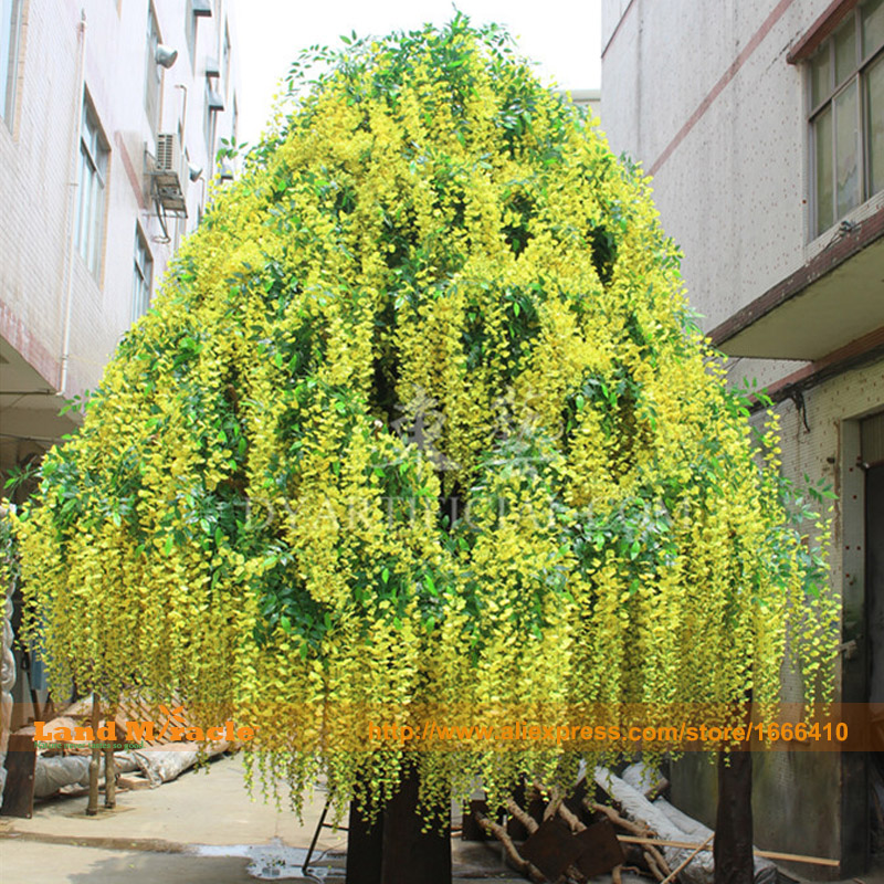 Bonsai Tree Yellow Wisteria Flower Seeds, 5 Seeds/Pack, Rare Flower Seeds Outdoor Plant DIY Home Garden