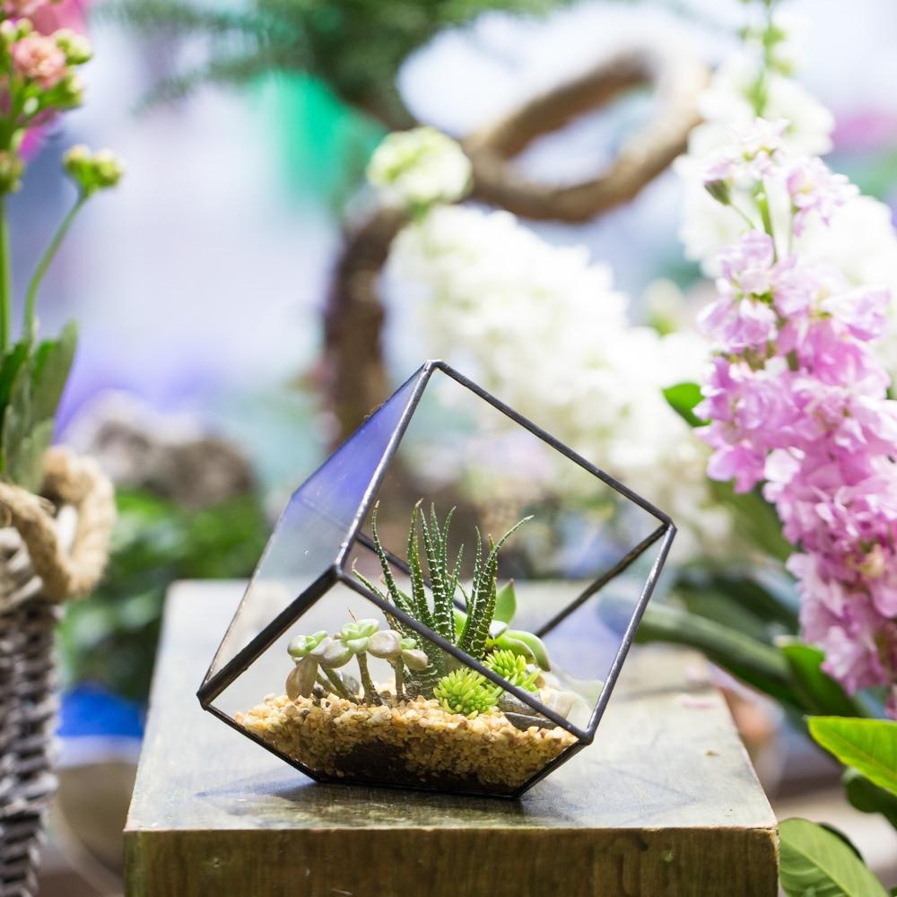 Tabelë Succulent Fern Moss Plant Peisazh Polifonik Qelqi i qartë - Dekor në shtëpi
