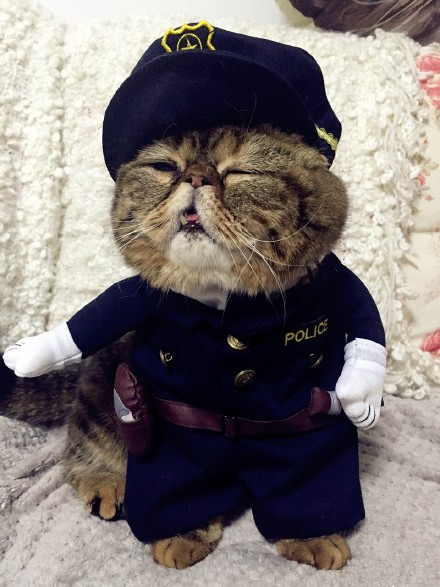 New-2016-whimsy-Free-shipping-so-funny-Pet-cat-dog-Dress-uniform-suit-clothes-hat-become (2)