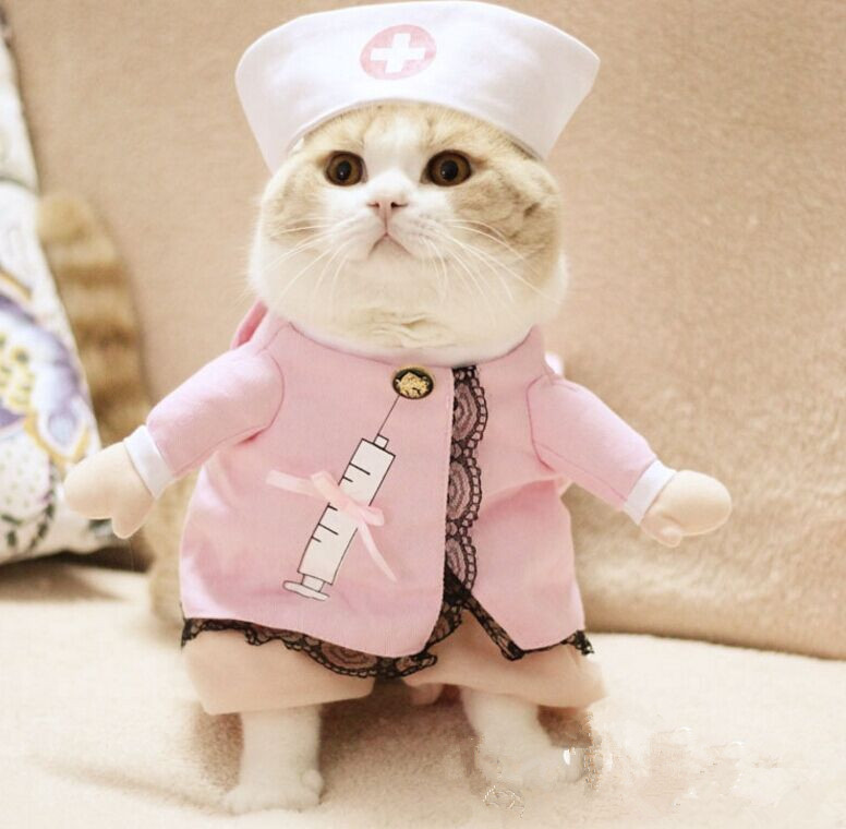 2016Cat-Costume-Cat-Clothes-Sexy-Nurse-Uniform-Free-Shipping-D83