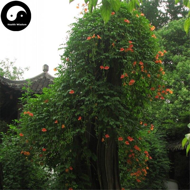 Zlking 100pcs Campsis Trumpet Vine Trumpet Creeper Flower Bonsai Plant Diy Home Garden Buy Now Garden Supplies Home & Garden