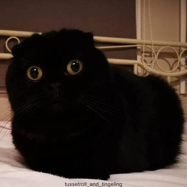 迷路猫之超威蓝猫和煤球黑猫