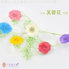 Flower Invitation Hibiscus Flowers _DIY Pressed Dried Flowers