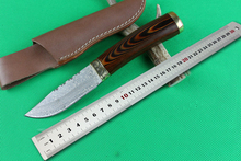 Outdoor Damascus Knives Burl Wood Handle Hunting Fixed Blade Knife Utility Camping Multi EDC Knives Tools High Quality
