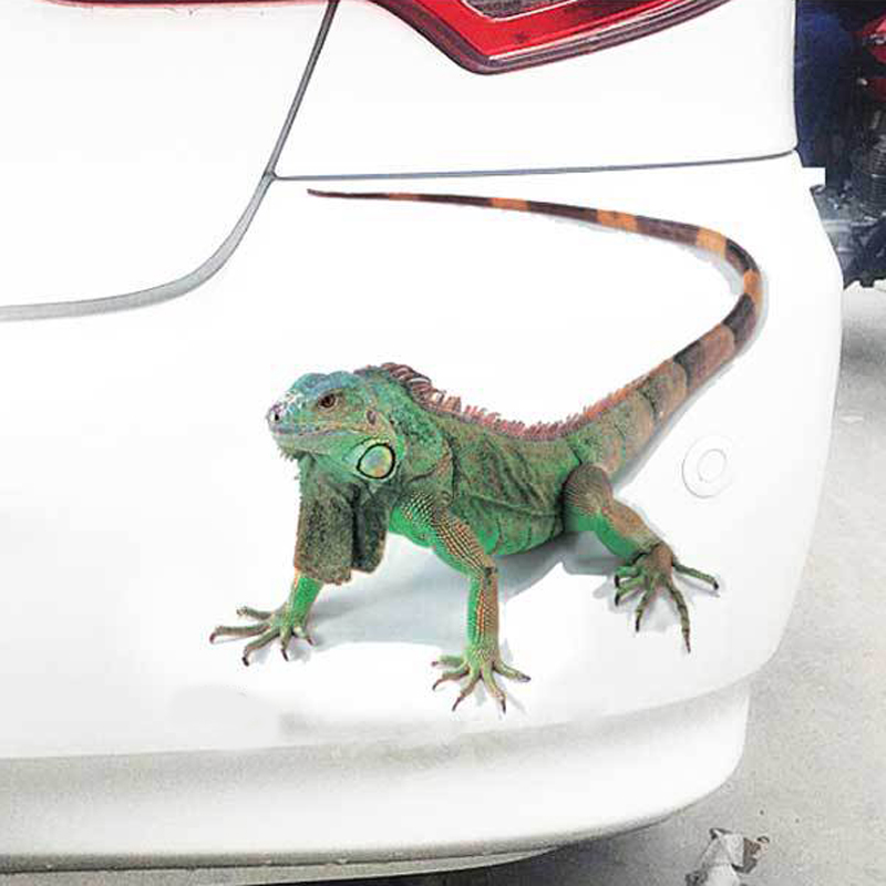 Image 5 - 3D Car Sticker Animals Bumper Spider Gecko Scorpions Car styling Abarth Vinyl Decal Sticker Cars Auto Motorcycle Accessories-in Car Stickers from Automobiles & Motorcycles