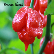 "20  Seeds / Pack , Local Farmer "" Trinidad Moruga Scorpion Pepper "" The World Hottest Chili"