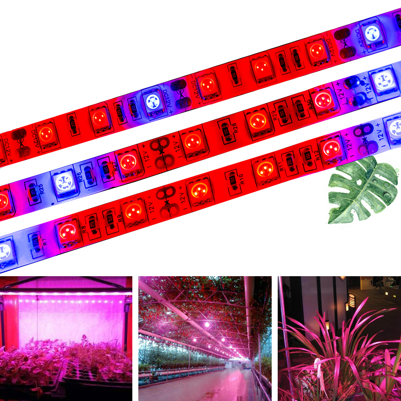 SMD 5050 Grow Lights DC12V Growing LED Strip 5m LED Tape IP20 IP65 Light Growth Plant for Plant Green Hydroponic Plant