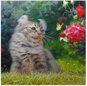 2016 5D diamond mosaic Diy Diamond painting COOL CAT home decoration wall sticker 3D diamond embroidery needlework home decors