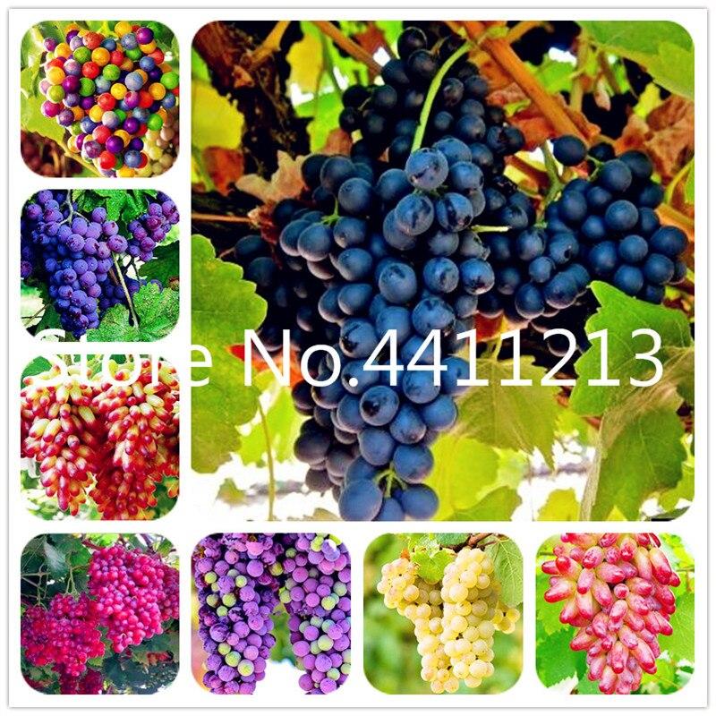 50 Pcs/bag Rare Color Finger Grape Bonsai Organic Heirloom Fruit,Natural Growth Grapes,Bonsai Pot Plants For Home Garden