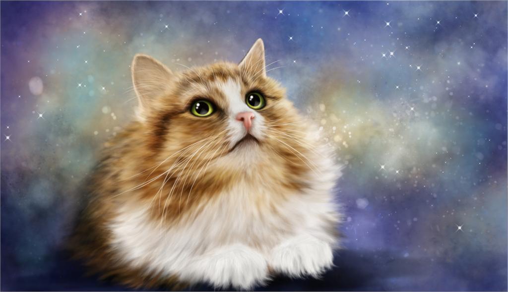 Animals kote kot koshka vzglyad Cat Poster Home Decor canvas printed 4 sizes  Free Shipping
