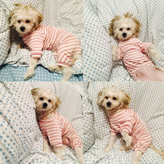 Striped Jumpsuit for Dogs 4