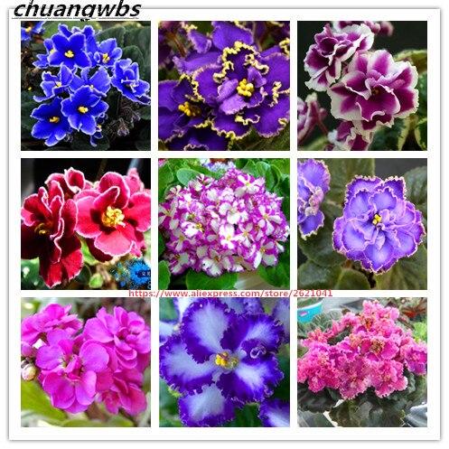 100 pcs/bag african violet seeds, bonsai flower seeds, garden flowers violet seeds perennial herb plant pot for home garden
