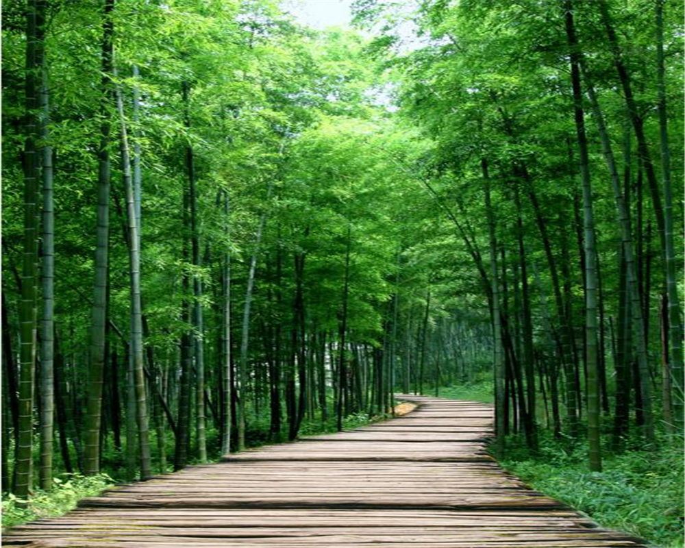Us 99 34 Offbeibehang 3d Wallpaper Decorative Painting 3d Mysterious Clear Bamboo Forest Trail Entrance Aisle Backdrop Murals Wallpaper 3 D In
