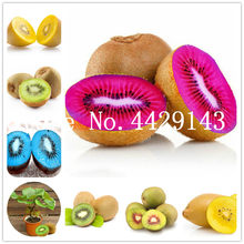 Bonsai 80 pcs/bag Fruit ,four Kinds Kiwi,red Yellow Green Purple Nutrition Is Rich Tasty And Delicious,DIY Home Garden,non-gmo(China)