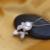FENASY Pingente Folha, Agradável Bonito Branco Pérola Rosa Colar de mulheres, colares & pingentes gargantilha colar de jóias de moda com caixa de presente