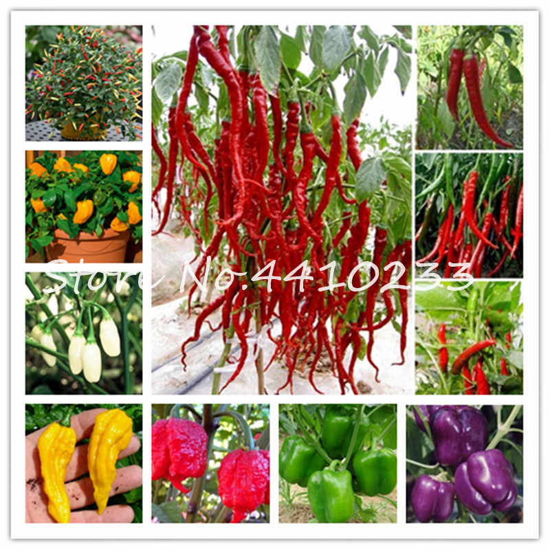 New Arrival 200 Pcs Giant Spices Rainbow Chili Hot Pepper Bonsai Plant Garden Supplies Interest Pot Bonsai Plant For Happy Farm