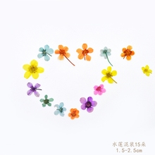 Water Lotus  flower handmade dried flowers florizone embossed glue natural branches free shipping
