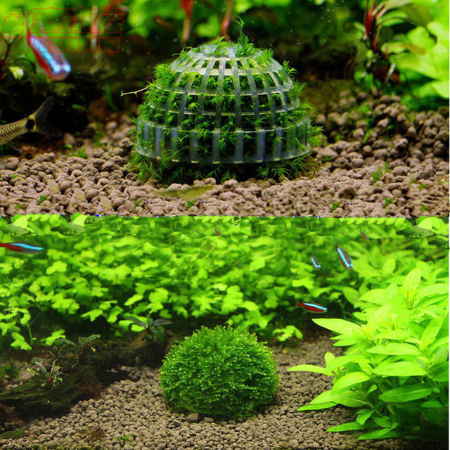 4 pcs moss bucephalandra sp holders for aquarium landscaping with mineral ball shrimp tank must have