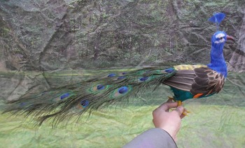 simulation Peacock toy large 70cm colourful peacock model toy craft,photography,teaching props,home decoration a1925