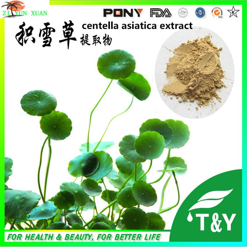 Centella Asiatica / Gotu Kola Extract in Asiaticoside 10%~90% HPLC free shipping mhs 3206a dual channel nc function dds signal generator counter dds signal source frequency meter 6mhz