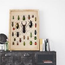 Cuadro sobre lienzo para pared de la colección Beetle Vintage con ilustración antigua de insectos impresos cuadro para sala de estar decoración del hogar