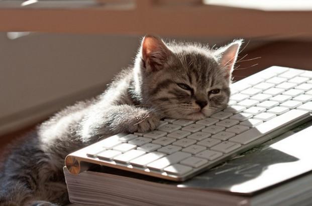 養寵問題大解疑:足不出戶的貓咪,也需要驅蟲嗎?