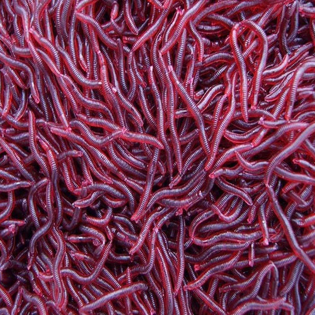 Online get cheap worms for sale alibaba for Red worms for fishing