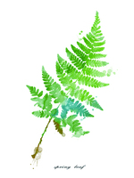 Hand painted Canvas Green Palms Leaves water Paintings Modern Unframed Wall Picture Wall Decor Home Decoration