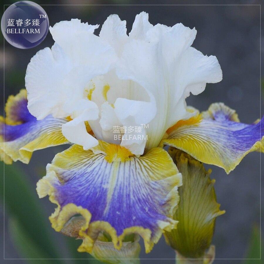 Aliexpress Buy Bellfarm Bonsai Iris Sibirica Mixed 9 Colors