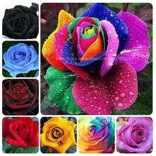 100 pcs/ bag Plant Rare Holland Rainbow Rose Bonsai Lover Multi-Color Plants Home Garden Flower plants BU28