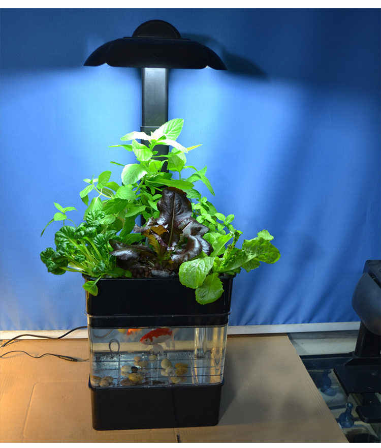 AQUAPONICS fish tank with plants growing bed, watering