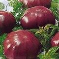 Elefante negro Semillas de Tomate, 100 semillas, paquete profesional, orgánica grande dulce de tomate TS383T