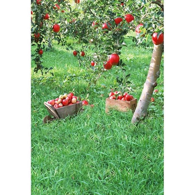 Senza Soluzione Di Continuità Vinile Fotografia Sfondo Rosso Apple
