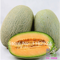 10g Super Sweet Chinese Heirloom Cantaloupe MELON SEEDS Fruit Seeds Free Shipping