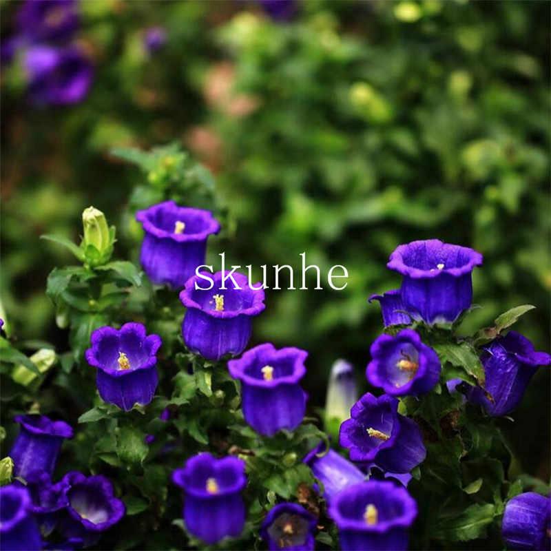 ふさふさベルフラワー盆栽青白バルコニー庭観賞植物花成長しやすい鉢植え花 100 ピース (風水玲曹操)