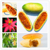 50 Pcs Passiflora Mollissima Banana Passion Fruit Seeds Delicious Fruit Seeds Rare Exotic Tropical Fruit DIY