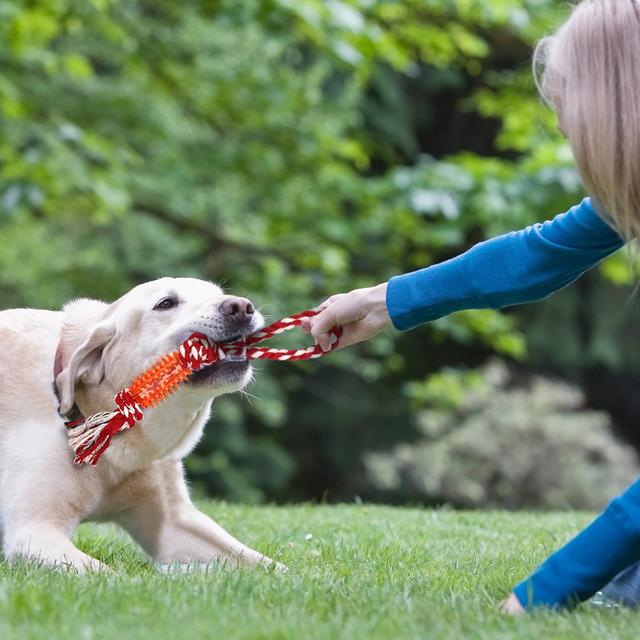 Juguete mordedor para Perros con Nudos