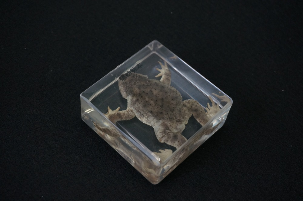 Real Toad Specimens In Clear Lucite Block educational Instrument цена