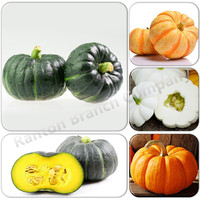 Japan Origin 100pcs/pack Mini White Green Red Yellow Beibei Pumpkin Mature 400G Vegetable Seeds vegetable seeds