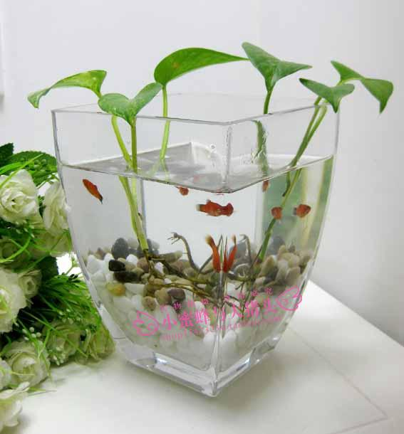 Fashion Classic Transparent Glass Hydroponic Plants And Flowers
