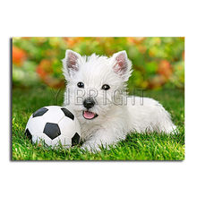"Full square diamond 5D DIY Embroidery Animal ""Dog"" diamond painting Landscape ""Sports Ball"" Cross Stitch Rhinestone Mosaic Decor(China)"