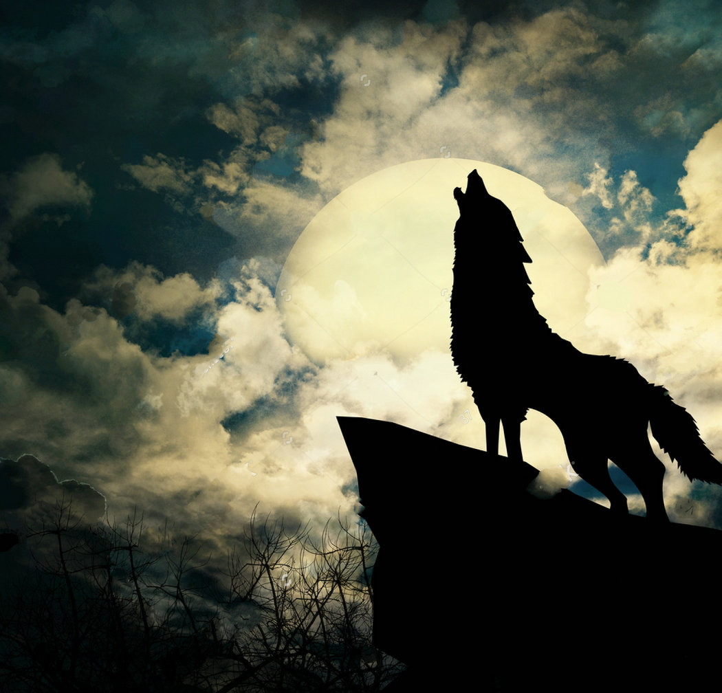 Wolf Silhouette Full Moon Clouds photo backdrop Vinyl cloth High quality Computer print party photo studio background