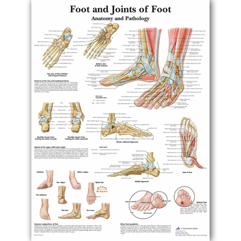 Foot Joints of Foot Chart Anatomy Pathology Poster Canvas Painting Wall Pictures for Medical Education Doctors Office Classroom