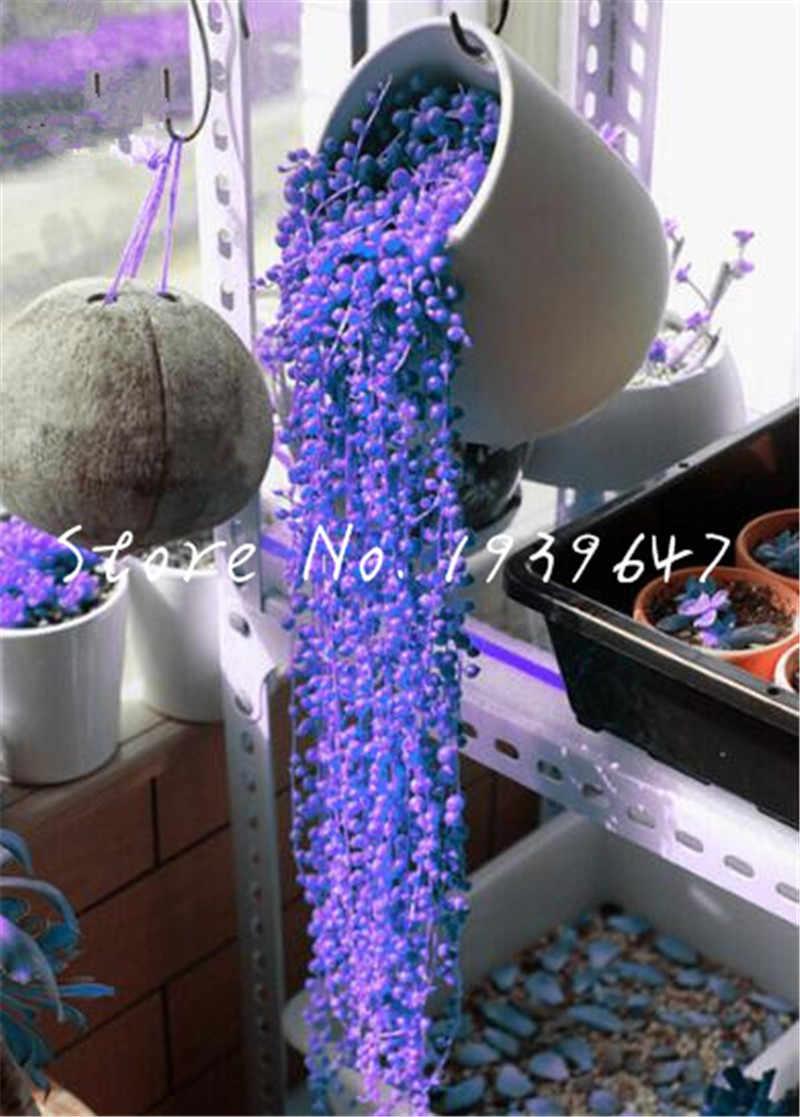 100 قطعة لون مختلط لؤلؤة الكلوروفيتوم بوعاء النبات عصاري بونساي الجسيمات المضادة للإشعاع ، مكتب سطح المكتب نباتات الزينة
