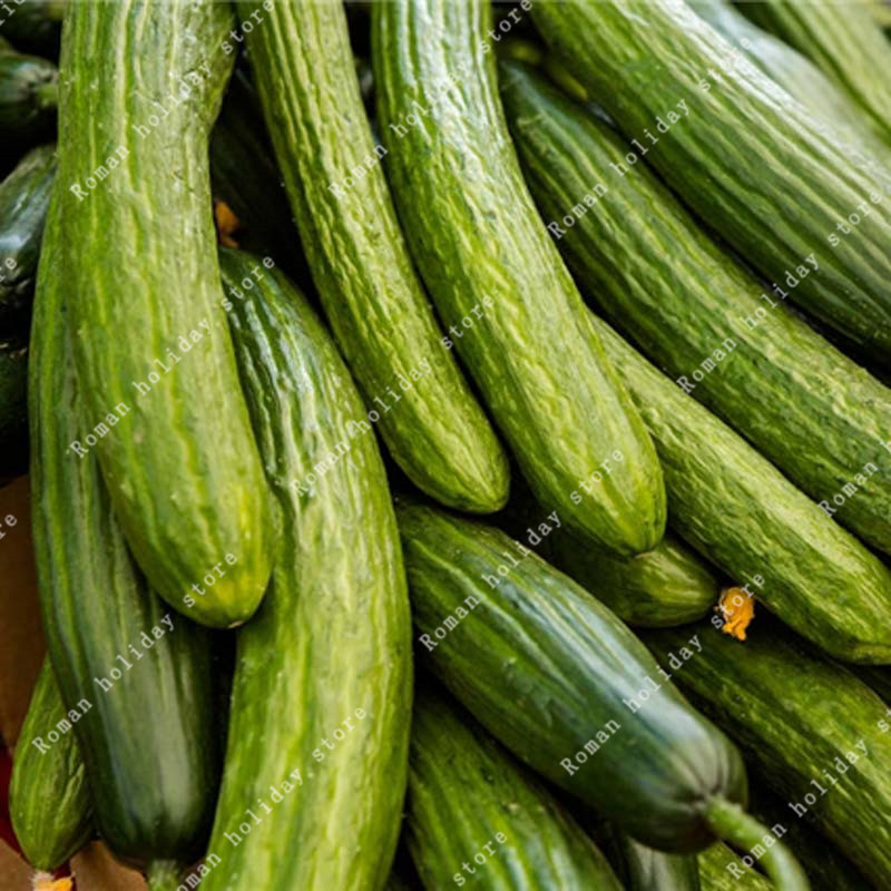 Zlking 100 Pcs Chinese Long Cucumber Bonsai Organic Vegetables Natural Non Gmo Nutritious Can Be Eaten Directly Home & Garden