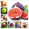 Edible organic fig fruit flores riching in vitamin productive fruit tree plantas healthy fruit bonsai plant DIY home  garden 200